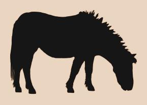 Aseo de caballos y mantención