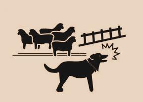 Arreo y trabajo con animales